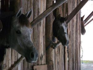Cavalos do Haras